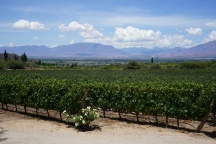 Vignobles de Cafayate, Argentine